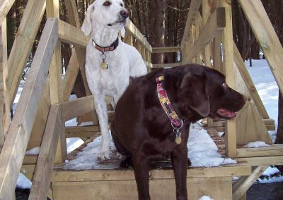 Gracie--Roxy-cross-the-river---Hockley-Valley
